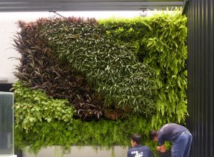 Vertical Garden Services Singapore