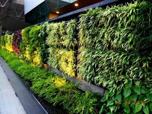 Vertical Garden Service Singapore